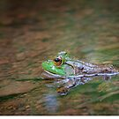 Frog Pond by David Lamb