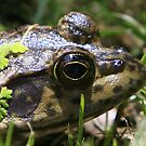 Profile of a Frog by NewDawnPhoto