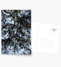 Coniferous Canopy Postcards