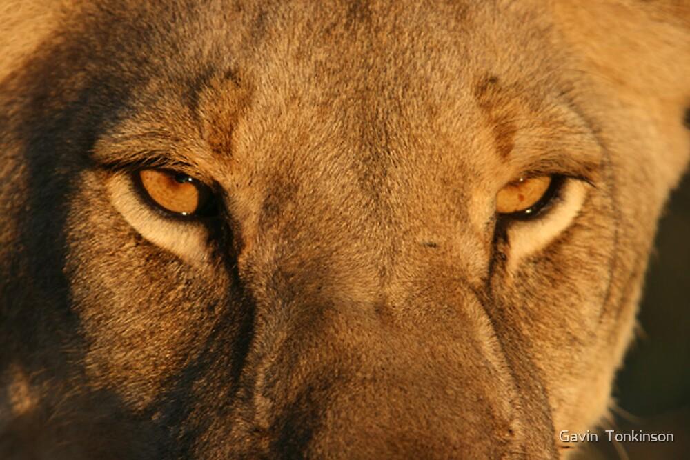 Feasty Eyes............ by Gavin  Tonkinson