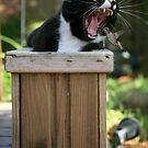Cat Flower by NewDawnPhoto