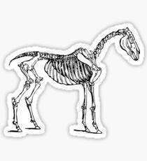Horse Skeletal Anatomy (Skeleton) Sticker