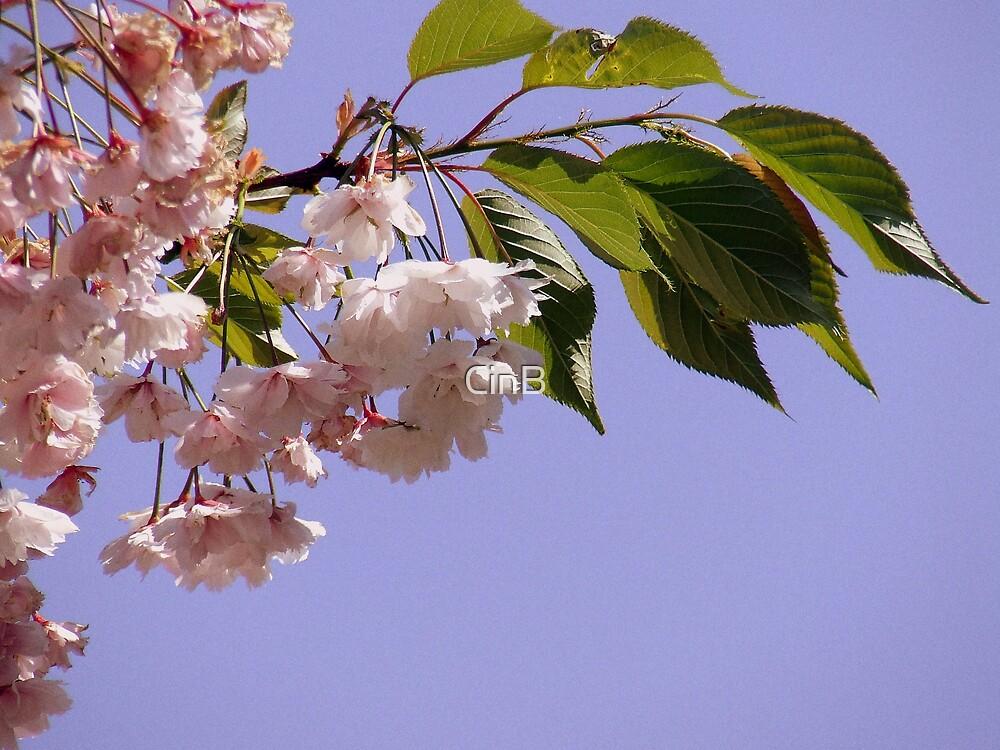 Blossom by CinB