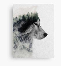 Wolf Stare Canvas Print