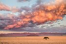 Namibian Plains at Sunset by Mieke Boynton