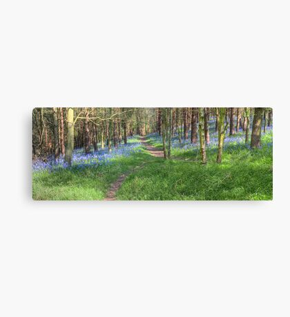 Bluebell Path 2 Canvas Print