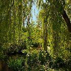 In Stanley Park, Vancouver BC September 2011 13 by Priscilla Turner