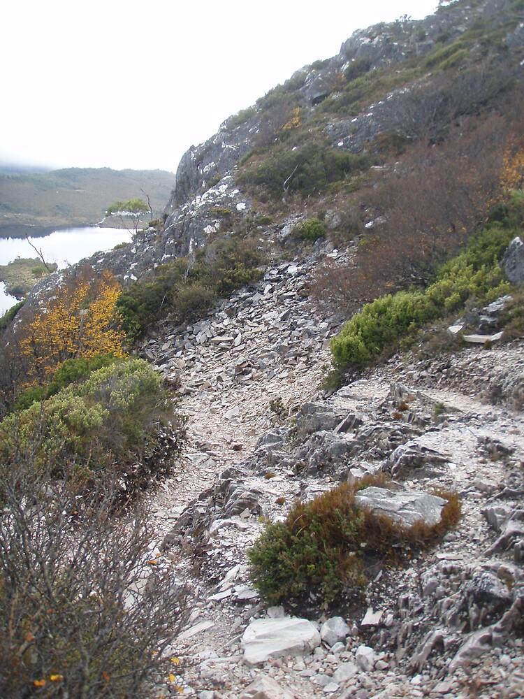 rough  terrain up to Hansons Peak, Tasmania by gaylene