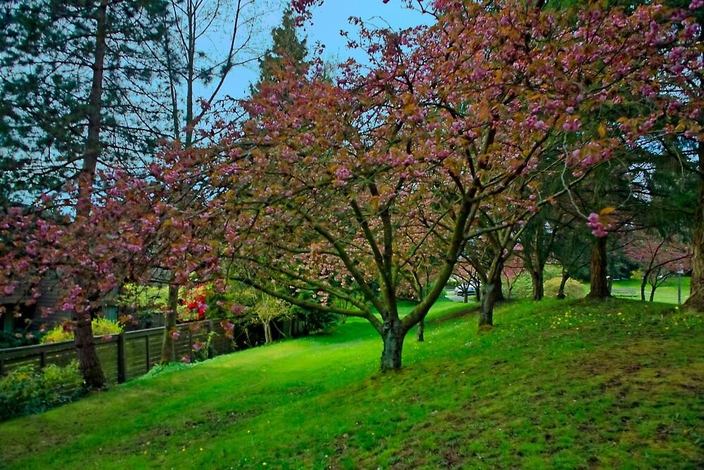 Springtime, the Arbutus Village 2008 12 by Priscilla Turner
