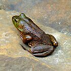 Country Frog by RickDavis