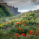 Northumbrian Beauty by vivsworld