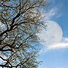 Full Moon by Deborah V Townsend