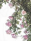 Arty Hanging Roses by Elaine Teague