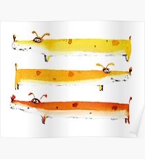 Funny colorful sausage dogs Poster