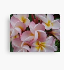 Pink Fragapani Bunch Canvas Print