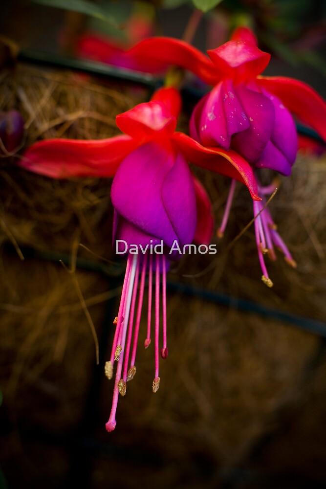 Mum's Flower 2 by David Amos
