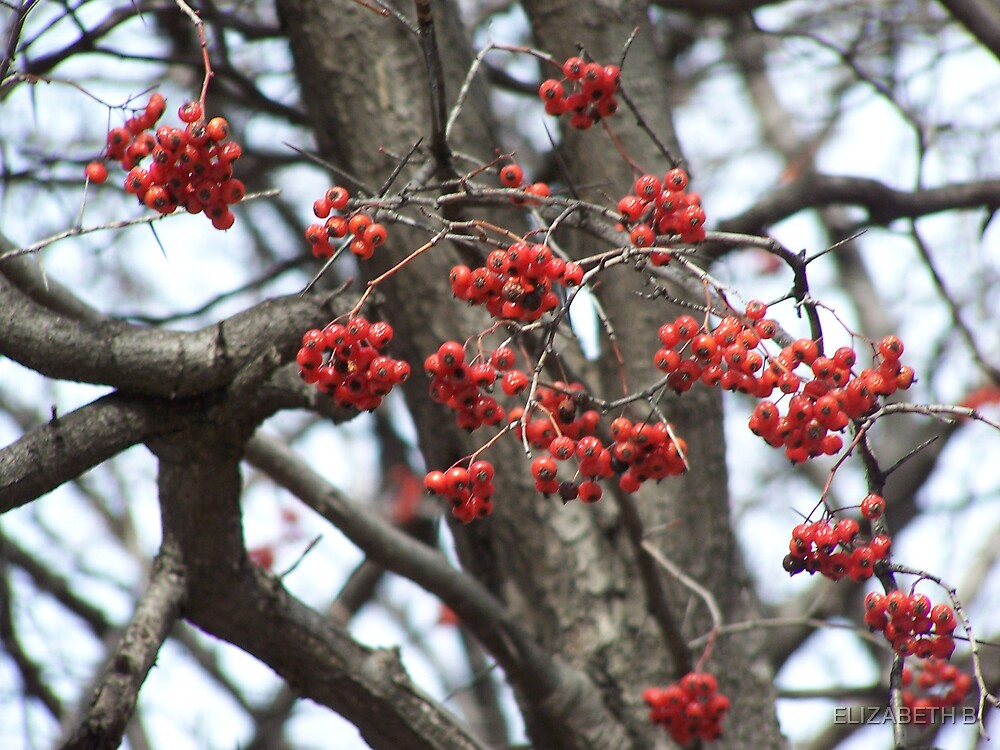 RED BERRYS by ELIZABETH B
