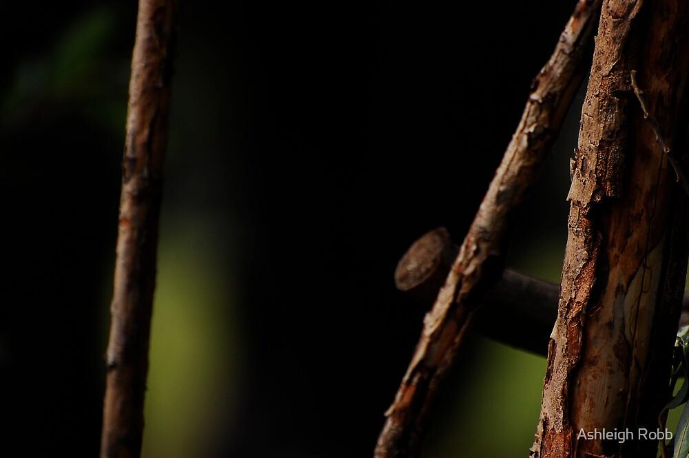 Sticks by Ashleigh Robb