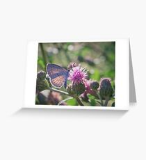 The Spring Azure Greeting Card
