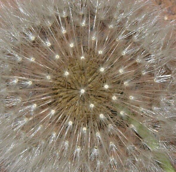 Sparkles by Robyn Smith