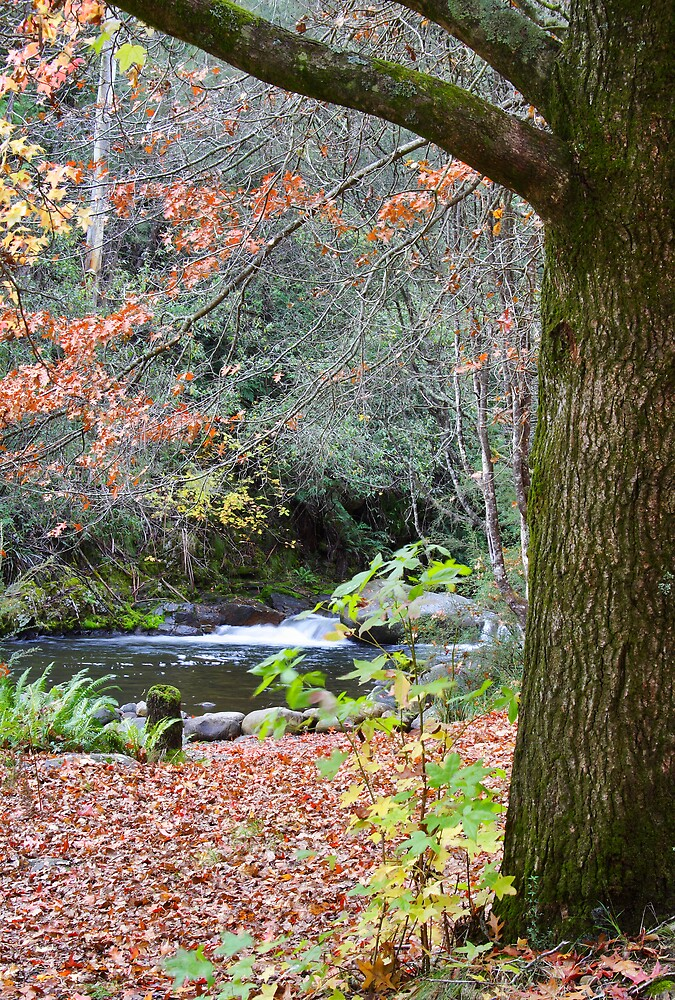 Autumn Falls by David Haviland