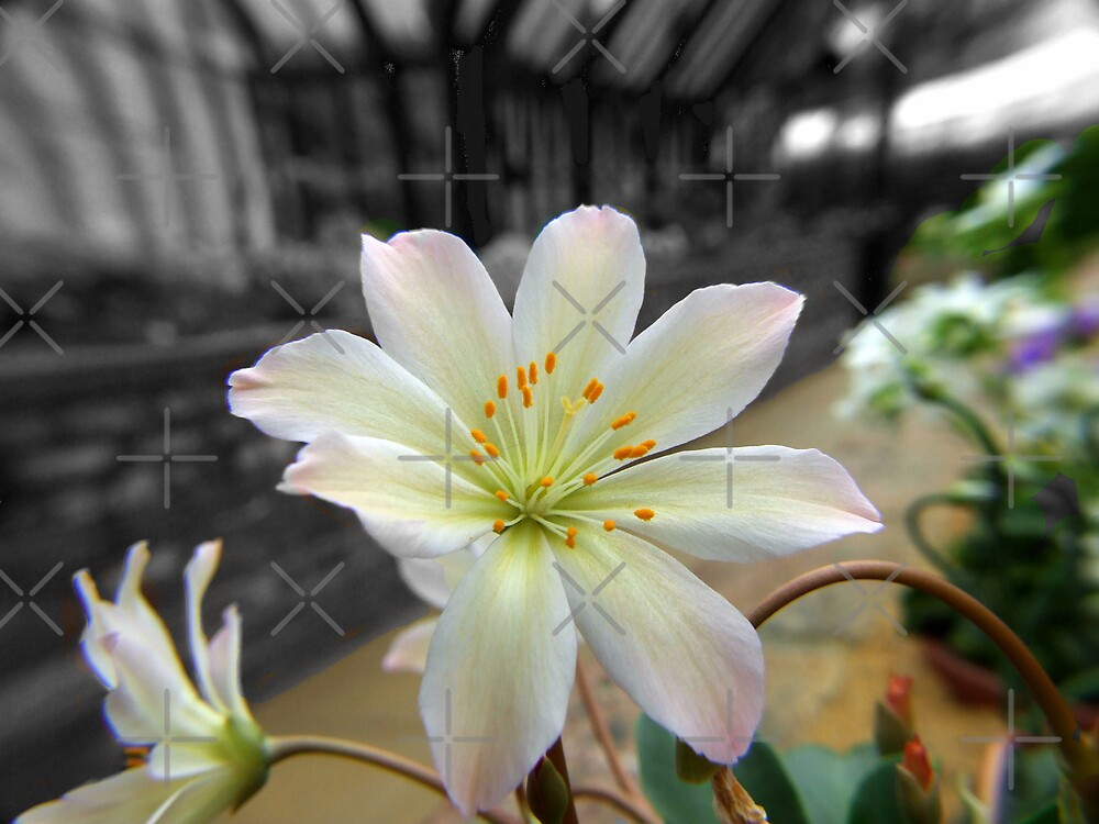 Glass House Flower by Paul Revans