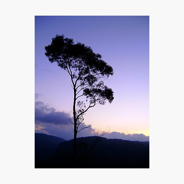 Purple tree silhouette Photographic Print