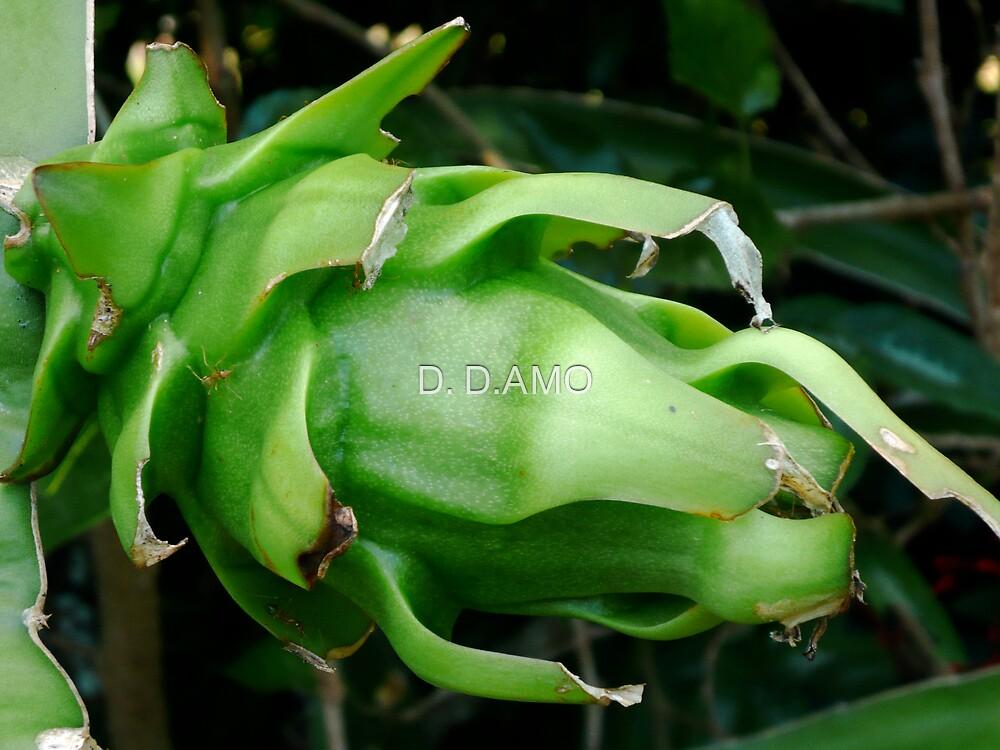 Green Pitaya by D. D.AMO