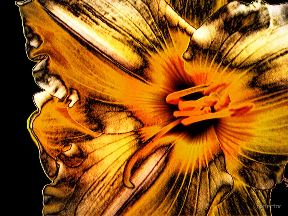 Day Lily Golds by reflector
