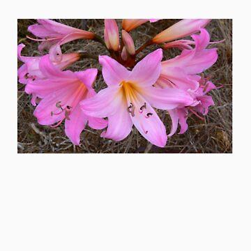 Pink by lilyjane