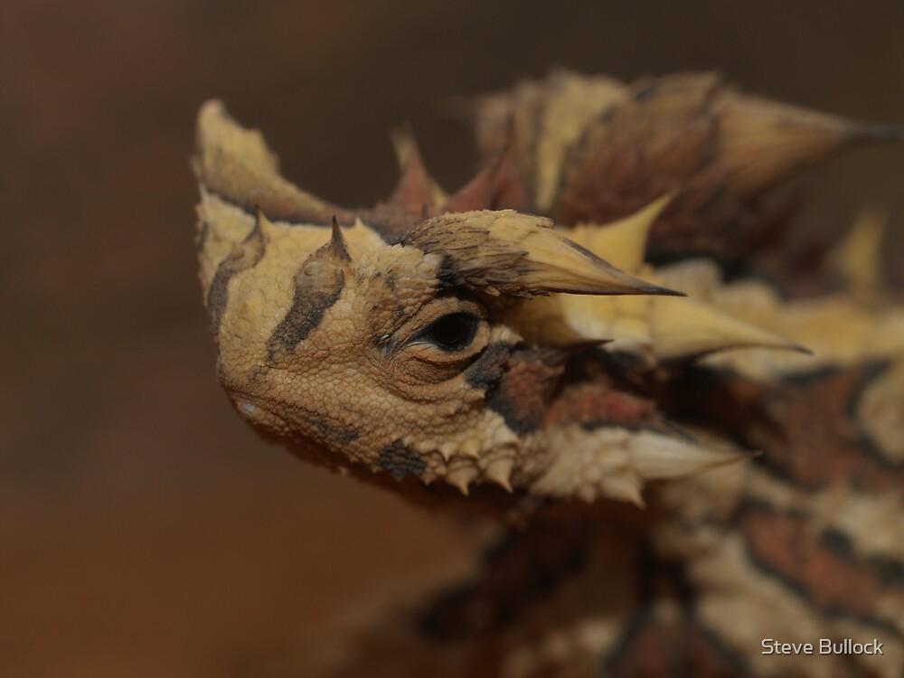 Thorny Devil by Steve Bullock