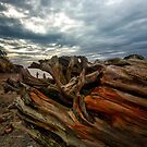 Mendocino Coast by Richard Mason