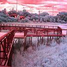Infrared by Paula Bielnicka