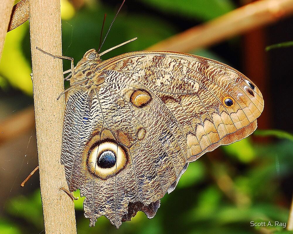 Moth by Scott A. Ray