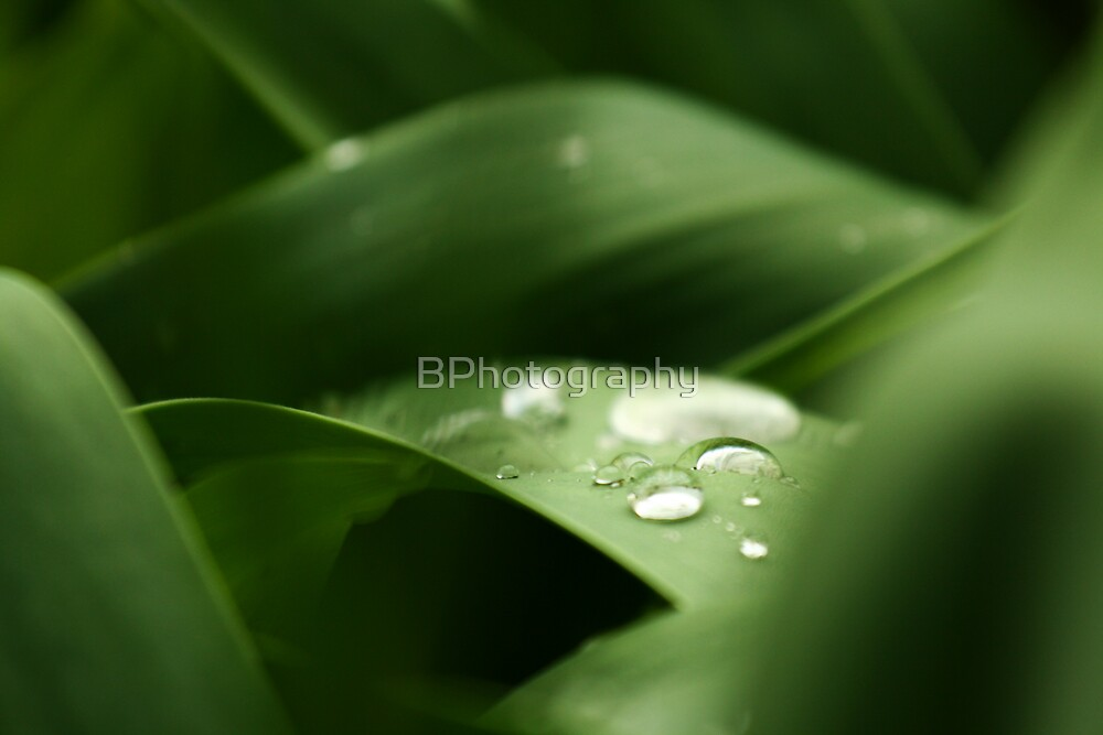 Water drops by BPhotography