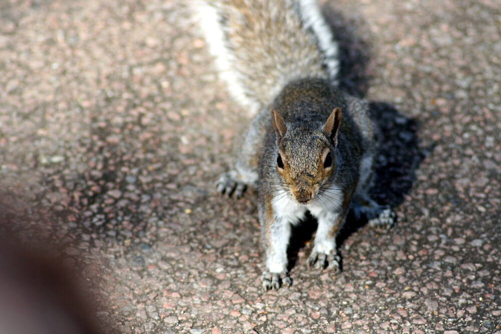 What no nuts by Robert Deaton