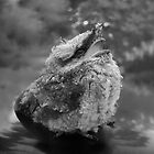 Tawny frogmouth chick by Matt Mawson