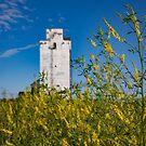 Old Grain Elevator On The Prairie by Steve Boyko