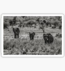 Three Elephants (Loxodonta africana) Sticker