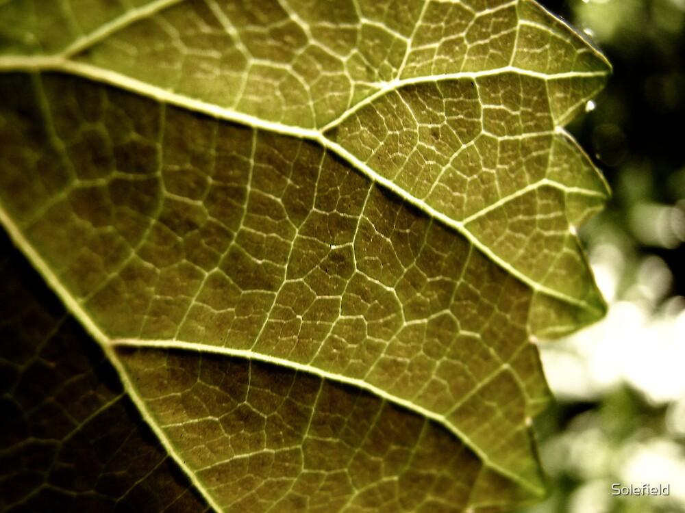 Light runs through my veins  by Solefield