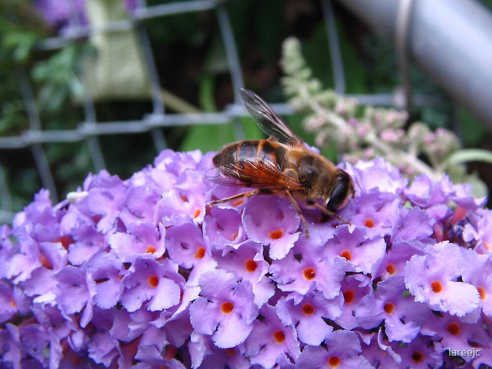 Flower-Bee-Sweet by lareejc