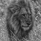 Lion by Deborah V Townsend