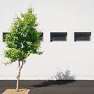 Urban Tree by Robert Dettman