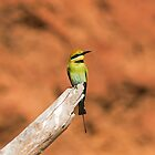 Rainbow Bee Eater against Ochre by mncphotography