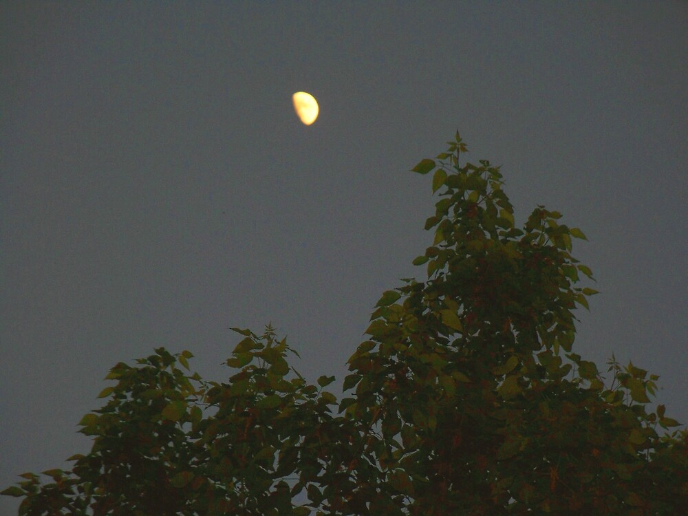 Shine on Moon ... by Judi Taylor