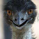Emu by triciaoshea