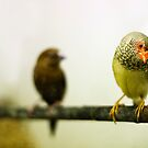 Star Finch - From the series 'Fly me to the Moon...' by heidiannemorris