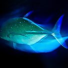 TRAVELLING TREVALLY! by NICK COBURN PHILLIPS