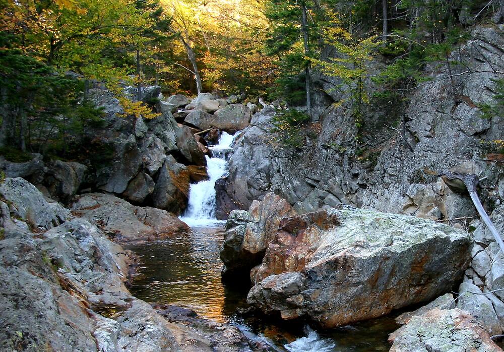 Glen Ellis Falls by Dave Law