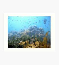 Underwater scenary Art Print